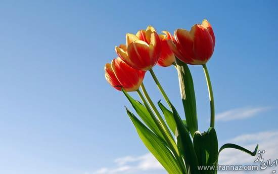 عکس های زیبایی از گل ها