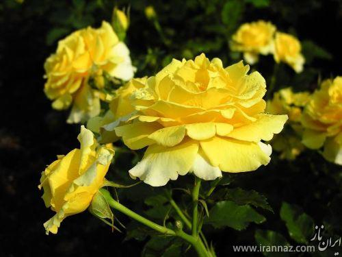 تصاویری زیبا از طبیعت و گل ها