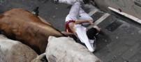 اقدام خطرناک این مرد در هنگام حمله گاوها (عکس)