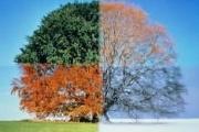 فال رنگ ها در فصل های سال