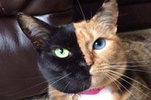 این گربه 27 هزار نفر طرفدار دارد! (عکس)