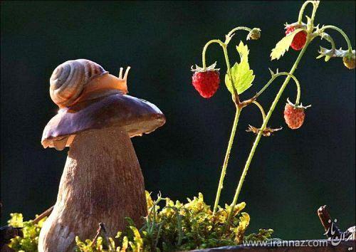 عکس هایی بسیار زیبا از حلزون