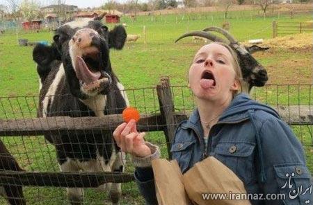 سری جدید عکس های خنده دار از همه جا