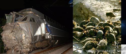 حادثه ناگوار برای 2 قطار به خاطر موش ها (عکس)