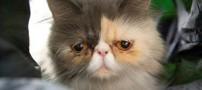 گربه ای که به خاطر چهره اش به شهرت رسید (عکس)