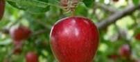 داستان زیبای پسرک و درخت سیب