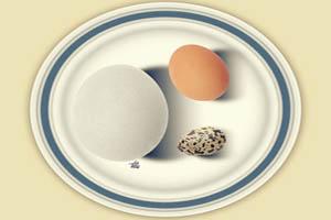 ارزش غذایی کدام بیشتر است؟ تخم مرغ، تخم غاز یا اردک؟