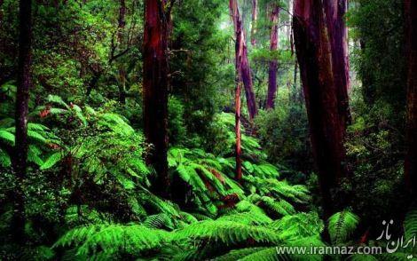 تصاویری شگفت انگیز از جنگل های آمازون