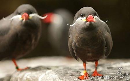 تصاویر بسیار زیبا از پرندگان رنگارنگ
