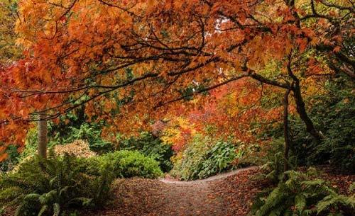 تصاویر جذاب و دیدنی از فصل زیبای پاییز