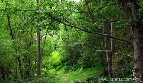 آشنایی با بزرگترین پارک های جنگلی ایران (عکس)
