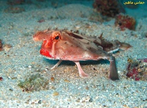 عکس موجودات بسیار زیبا در اعماق اقیانوس ها