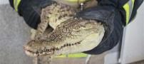 شکار تمساح یک متری در تهران (عکس)