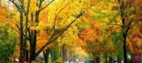 پاییز زیبا و دیدنی در شهر Ann Arbor (عکس)