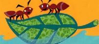 شعر کودکانه و زیبای مورچه توانا