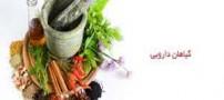 دارو های گیاهی مفید برای کاهش استرس