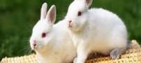 تعبیر خرگوش به خواب دیدن