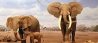 تعبیر فیل به خواب دیدن