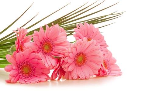 Image result for ?زیباترین گل?