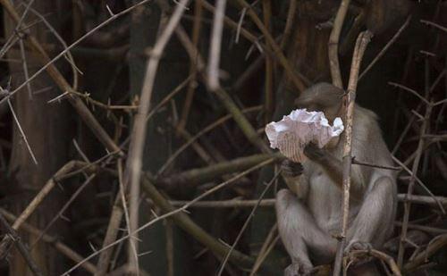 رفتار دیدنی و شوکه کننده میمون هنگام دیدن روزنامه (عکس)