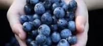 فواید و خواص استفاده از گیاه بلوبری