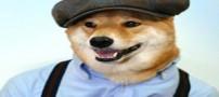 تصاویری جالب از سگی که لباس های مارک دار می پوشد