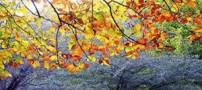 علت تغییر رنگ درختان در فصل پاییز چیست؟