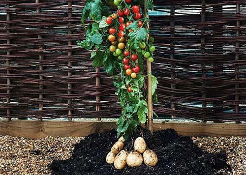 نوع جدید و عجیب یک پیوند گیاهی در انگلستان (عکس)