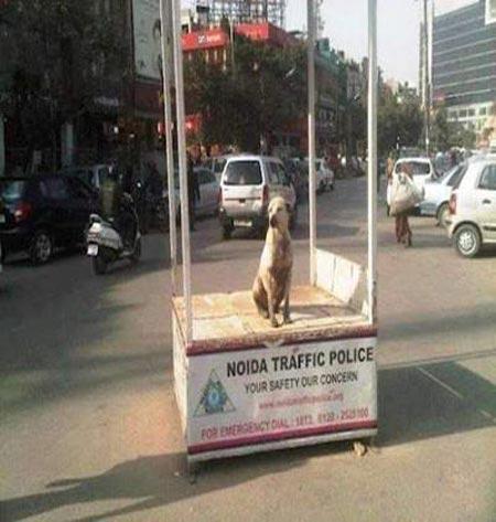 عکس های خنده دار از سوژه های جالب هندی ها