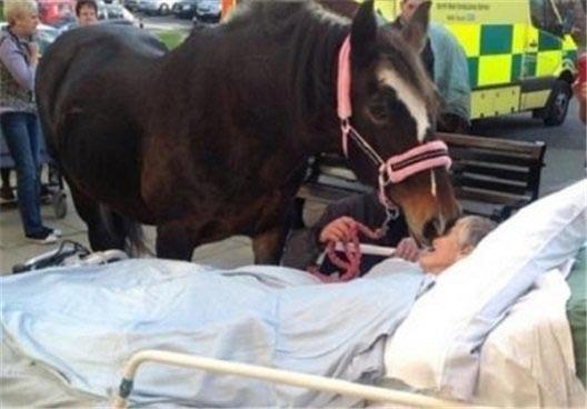 وداع غم انگیز زن 77 ساله با اسب خود! (عکس)