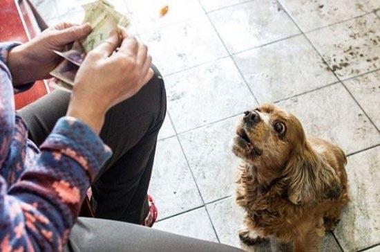 حرکت جالب این سگ برای پول گرفتن از عابران (عکس)