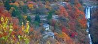 به شهرت رسیدن جاده های زیبای کشور ژاپن (عکس)
