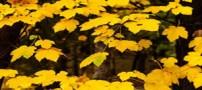 شگفتی های فصل پاییز در طبیعت تهران