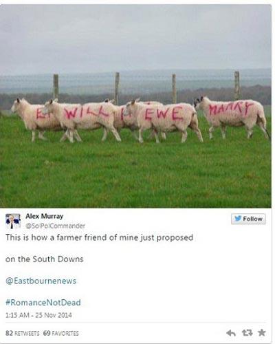 خواستگاری گوسفندی سبک جدید کشاورز 34 ساله (عکس)