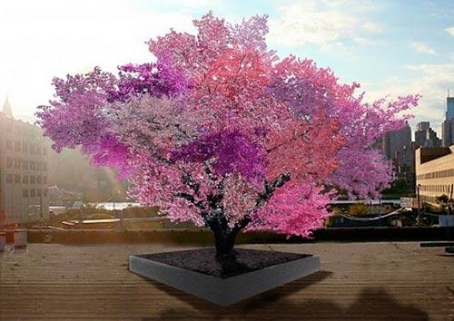 این درخت 40 نوع میوه میدهند ! (+عکس)