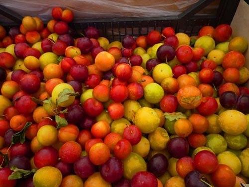تولید 40 نوع میوه از این درخت شگفت انگیز (عکس)