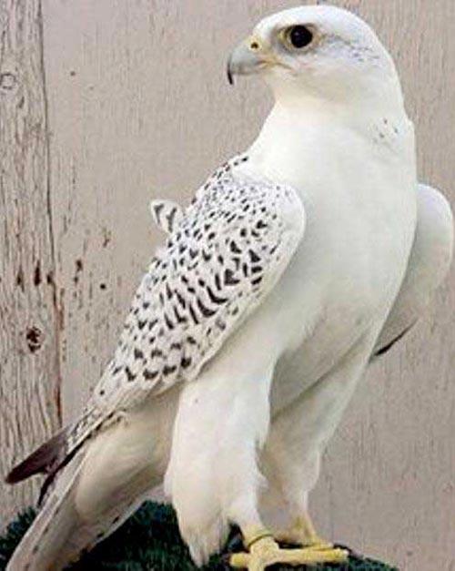 ربوده شدن پرنده زیبای 300 میلیونی (عکس)