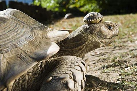 عکس هایی جذاب از دنیای لاک پشت های زیبا