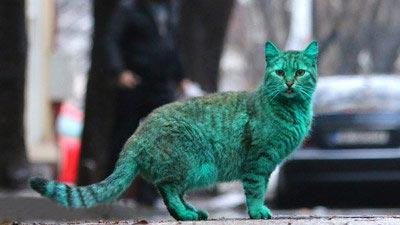 گربه ای که در بلغارستان جنجال به پا کرد (عکس)