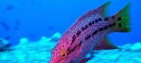 کشف نوعی ماهی در اعماق اقیانوس آرام (عکس)