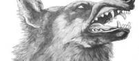تفسیر ضرب المثل کله گرگی