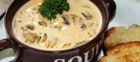 آموزش طبخ سوپ قارچ خوشمزه