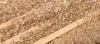 استفاده از خاک اره برای تولید بنزین