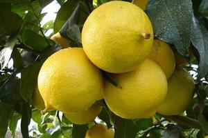 این میوه برای تقویت اعصاب مفید است