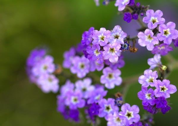 عکس های شگفت انگیز از گل های زیبا