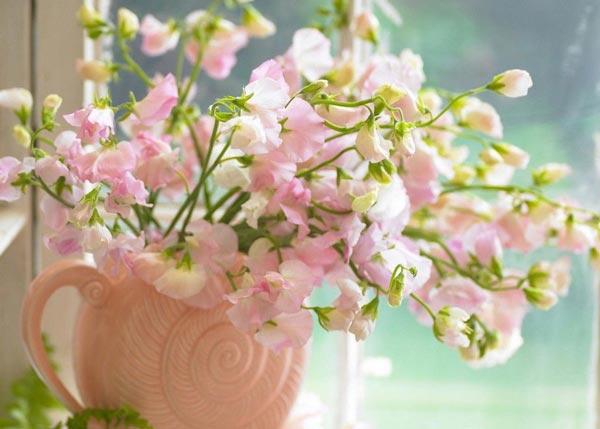 نتیجه تصویری برای گل های شگفت انگیز