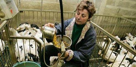 تهیه غذایی از اردک با بی رحمانه ترین روش (عکس)