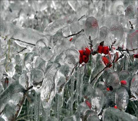 تصاویر دیدنی و زیبا از طبیعت برفی