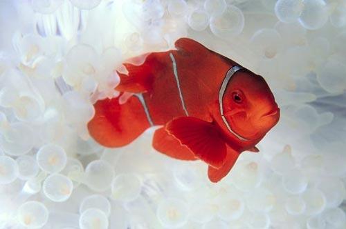 عکس های دیدنی از حیوانات بسیار زیبا