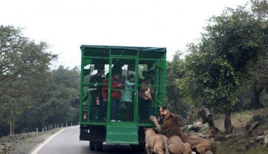 ترسناک ترین و هیجانی ترین باغ وحش جهان (عکس)